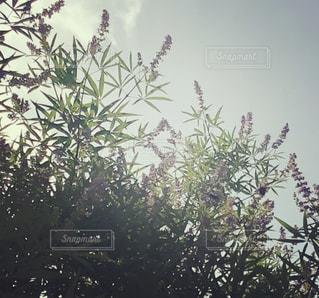 紫の花の写真・画像素材[1431674]