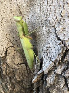 枝に緑色の昆虫の写真・画像素材[1674315]