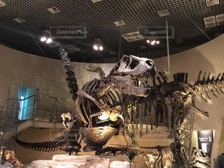 恐竜の全身骨格の写真・画像素材[1674348]