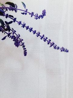 紫色の花の写真・画像素材[2797297]