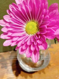 花の写真・画像素材[2896497]