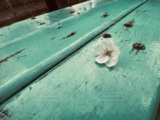 桜の写真・画像素材[3055533]
