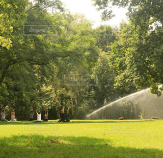 ドイツ_ベルリン_公園042の写真・画像素材[1242932]
