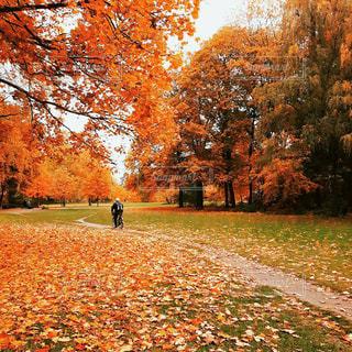 ドイツ_ベルリン_公園036の写真・画像素材[1242938]