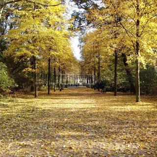 ドイツ_ベルリン_公園014の写真・画像素材[1242959]
