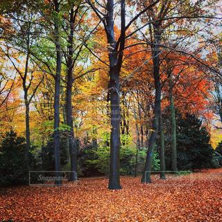 ドイツ_ベルリン_公園001の写真・画像素材[1242973]