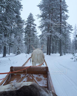 フィンランド013の写真・画像素材[1243191]