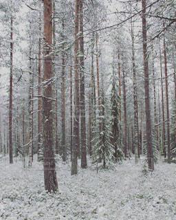 フィンランド006の写真・画像素材[1243198]