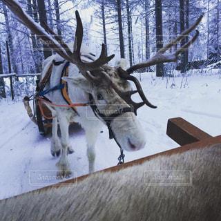 フィンランド003の写真・画像素材[1243201]