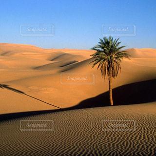 モロッコ_サハラ砂漠041の写真・画像素材[1250113]