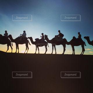 モロッコ_サハラ砂漠030の写真・画像素材[1250125]