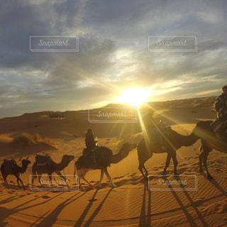 モロッコ_サハラ砂漠012の写真・画像素材[1250144]