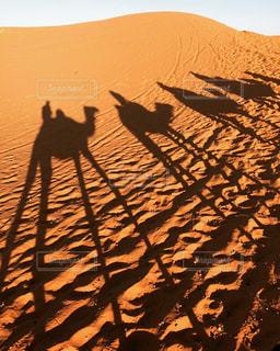 モロッコ_サハラ砂漠009の写真・画像素材[1250147]