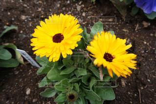 お花の写真・画像素材[1202293]