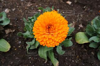 お花の写真・画像素材[1202294]