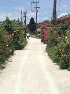 竹富島の石垣と花に囲まれた小道の写真・画像素材[1198066]