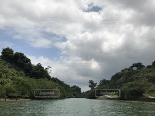比謝川のマングローブ林の写真・画像素材[1198073]