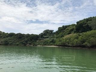 比謝川のマングローブ林の写真・画像素材[1198074]