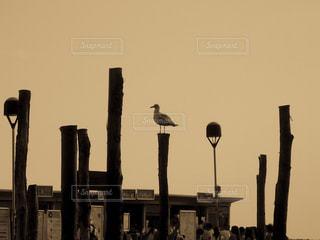 ヴェネツィア 大運河の杭で休む水鳥の写真・画像素材[1214909]