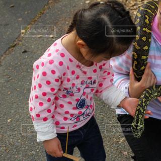 蛇とのふれあいの写真・画像素材[1229705]