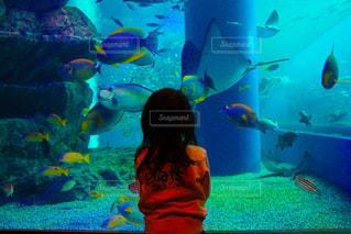 水族館の女の子の写真・画像素材[1229706]