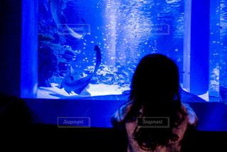 水族館の女の子の写真・画像素材[1229707]