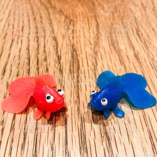 赤と青の金魚の写真・画像素材[1309688]