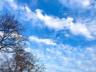 冬の青空と雲の写真・画像素材[1795889]