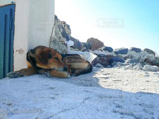 地面に横たわっている大きな茶色の犬の写真・画像素材[2791840]
