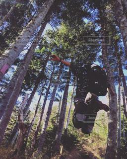 森でJUMPの写真・画像素材[1197767]