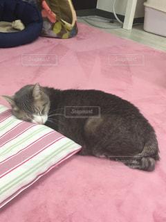 ピンクの毛布の上に横たわる猫の写真・画像素材[1197825]
