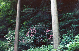 自然の写真・画像素材[140250]