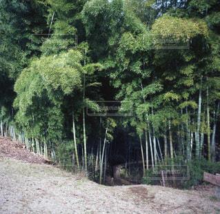自然の写真・画像素材[323559]