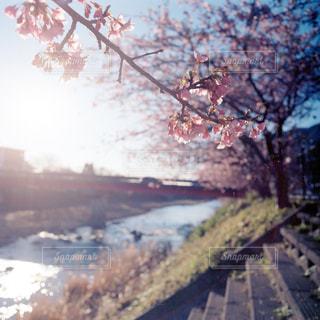 花の写真・画像素材[346565]
