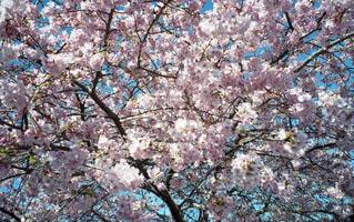 花の写真・画像素材[359573]
