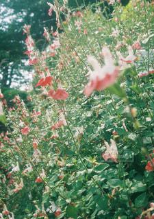 近くのフラワー ガーデンの写真・画像素材[765038]