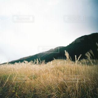 背の高い草のフィールドの写真・画像素材[913796]