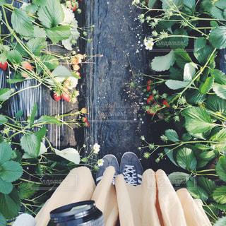 庭の植物の写真・画像素材[1068599]