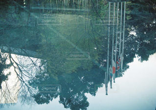 森を流れる川の写真・画像素材[1116637]
