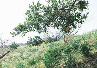 茂みや木のグループの写真・画像素材[1181534]
