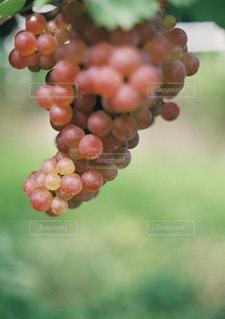 近くに果物のの写真・画像素材[1553950]
