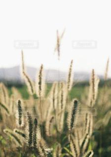 近くの植物のアップの写真・画像素材[1667022]