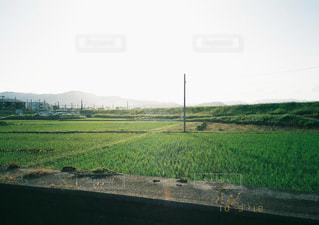緑豊かな緑のフィールドで列車の写真・画像素材[1882116]