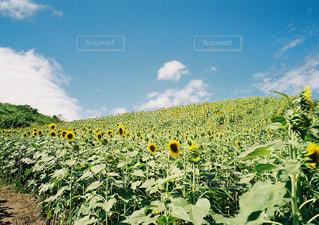 野原の茂みの群しの写真・画像素材[2425843]
