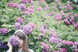 紫陽花の写真・画像素材[1201253]