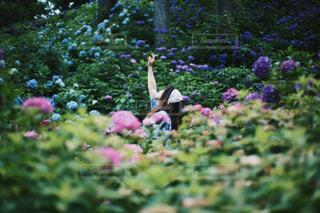 紫陽花の写真・画像素材[1201255]