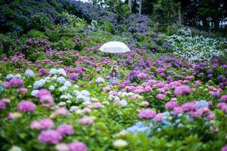 梅雨の日の楽しみ方の写真・画像素材[1240926]