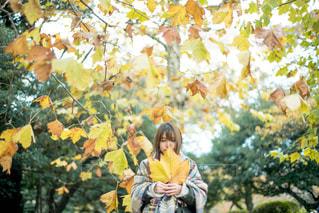 平成最後の秋の写真・画像素材[1388150]