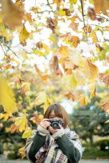 秋を残すの写真・画像素材[1388152]