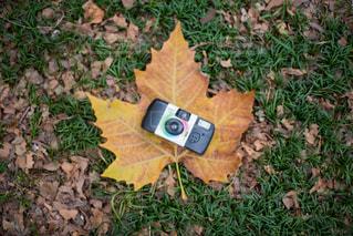 フィルムて撮る秋の写真・画像素材[1388158]